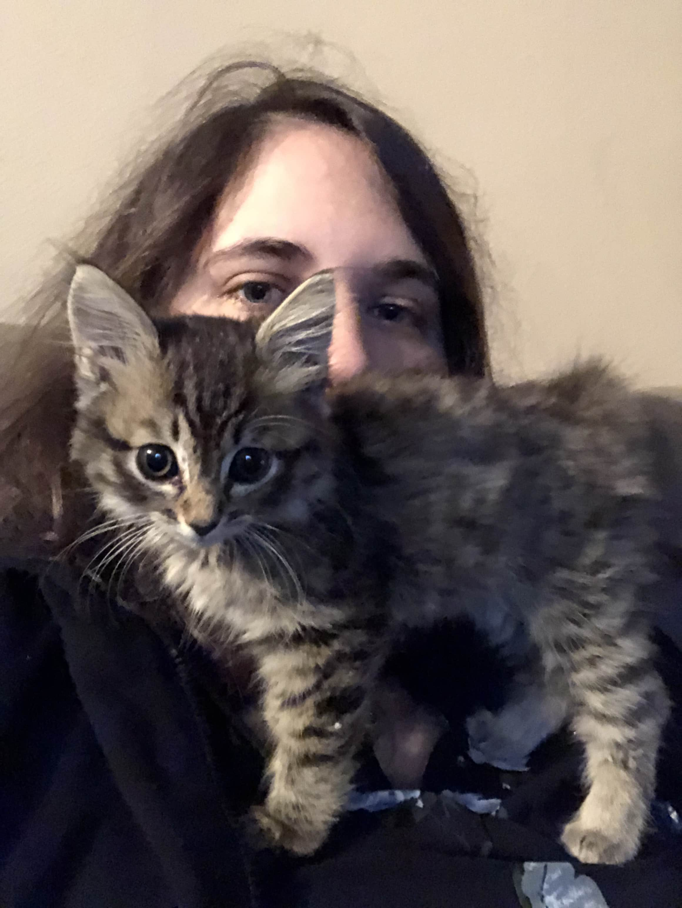 Arya the siberian cat standing on top of me.