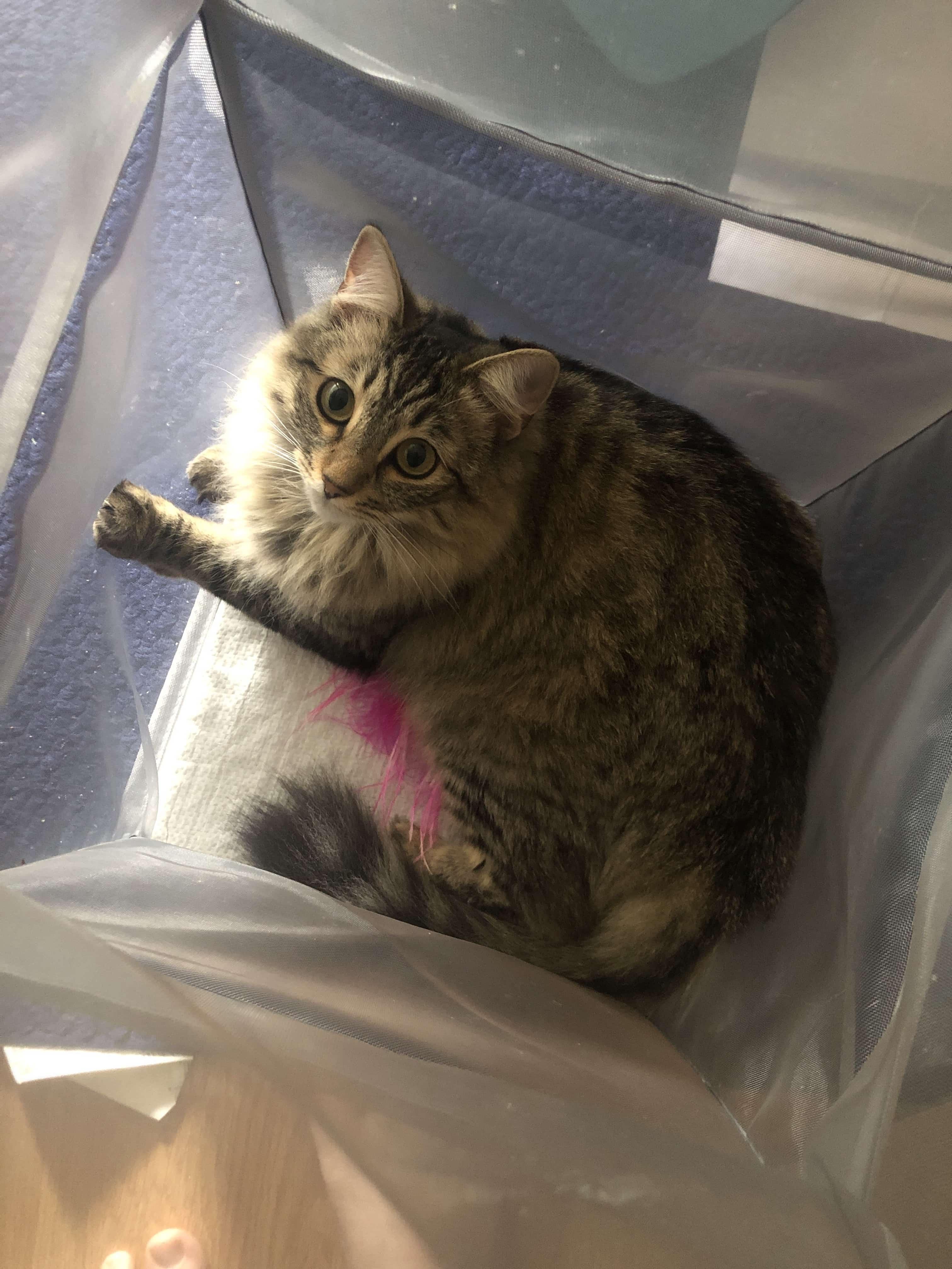 Arya the cat in a hamper